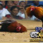 adu ayam, ayam pisau, agen s128.net, agen sabung ayam, agen sabung ayam teraman, sabung ayam pisau, sabung ayam filipina, agen s128 online, s128.net, sabung ayam terpecaya,adu ayam pisau, tangkas uang asli